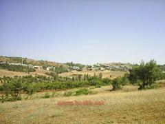 Sazlı Köyü